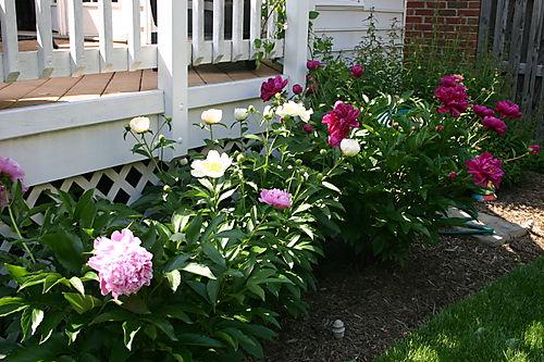 Garden Pictures 2008 012