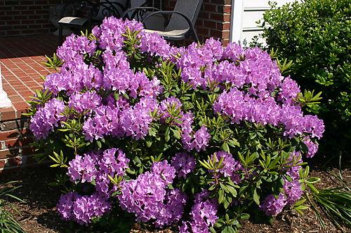 Garden Pictures 2008 029