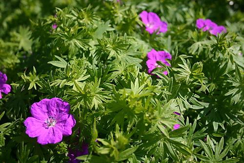 Garden Pictures 2008 031