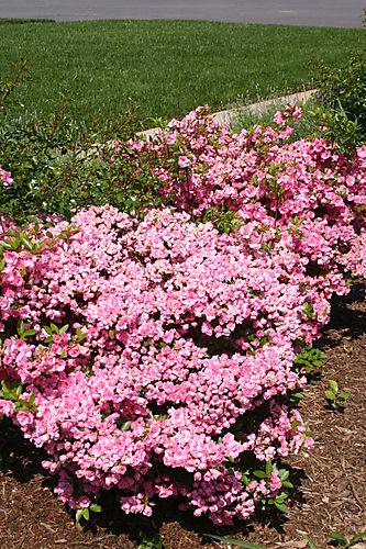 Garden Pictures 2008 030