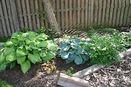 Garden Pictures 2008 014