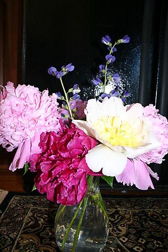 Garden Pictures 2008 033