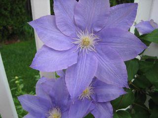 Flowers 2009 006