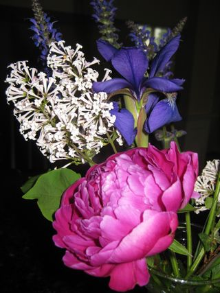 Flowers 2009 010