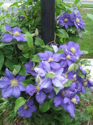 Flowers 2009 058
