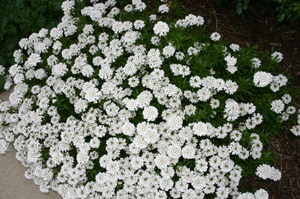 Early_may_flowers_017