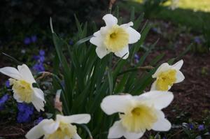 Garden_pictures_2008_004