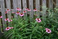 July_flowers_019