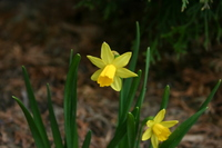 Spring_flowers_2006_001
